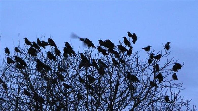 birdalert-vs-raager-1-0